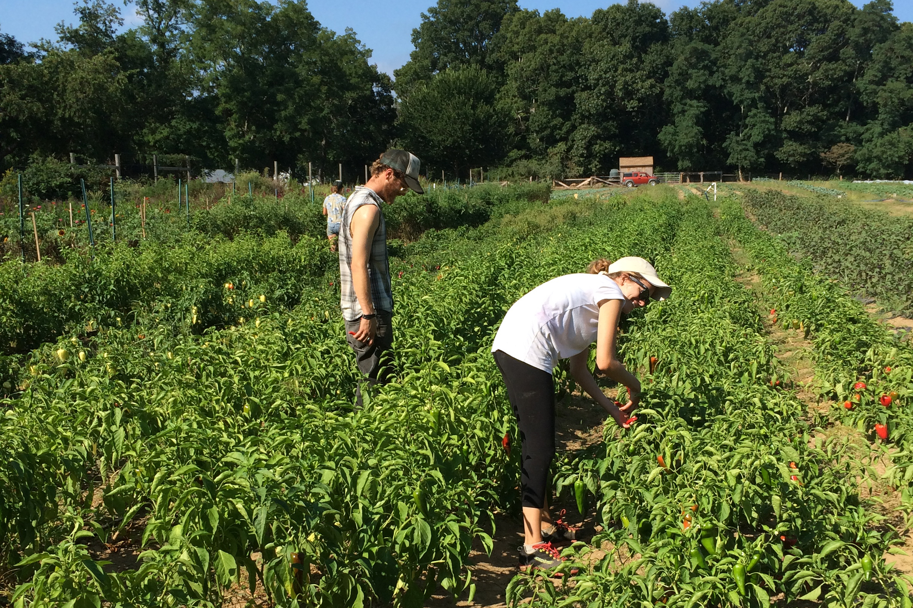 Gathering chili peppers with my homeboy Cody