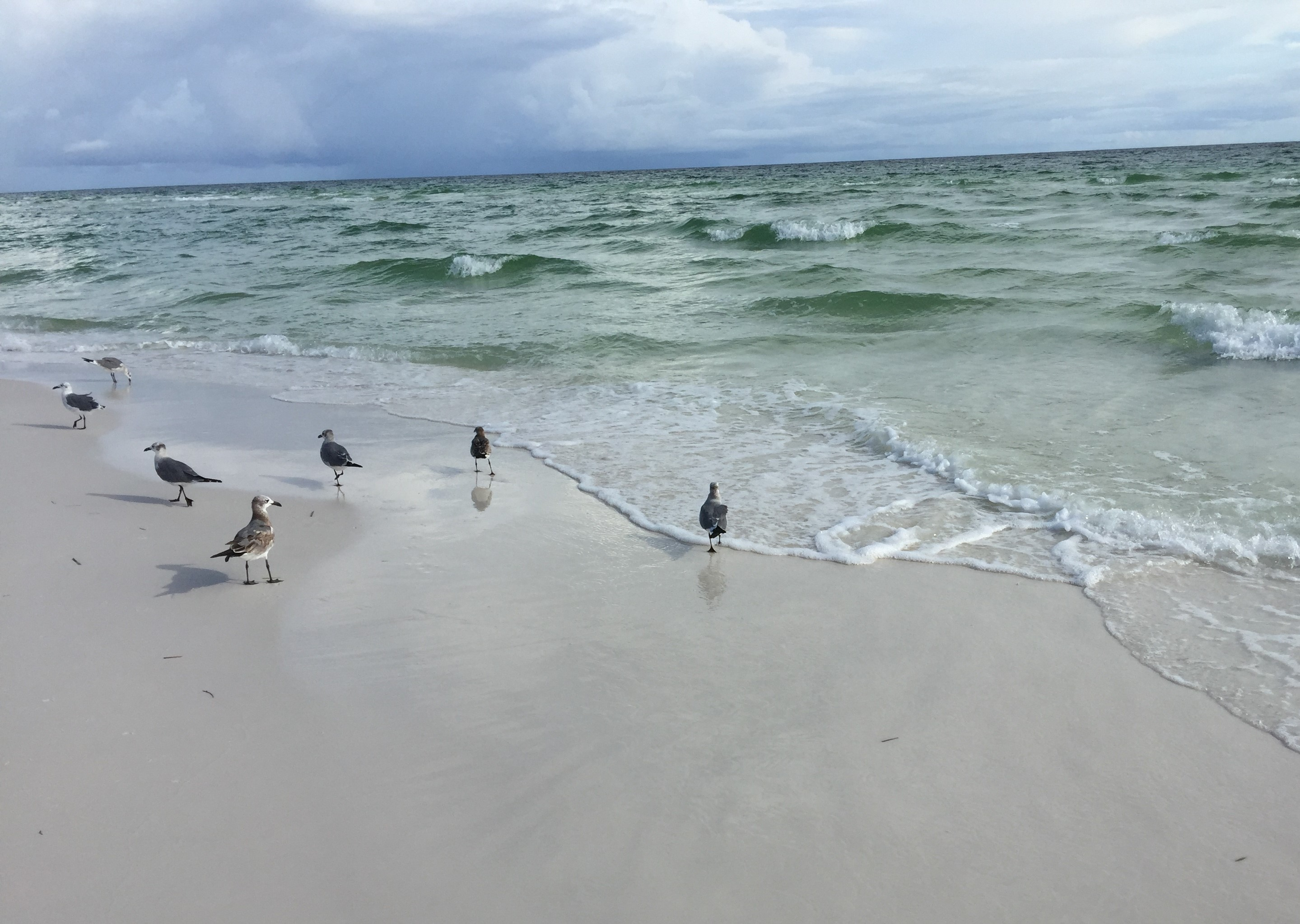 Some shorebirds I came across on a beach walk during a trip to the Florida panhandle a month ago
