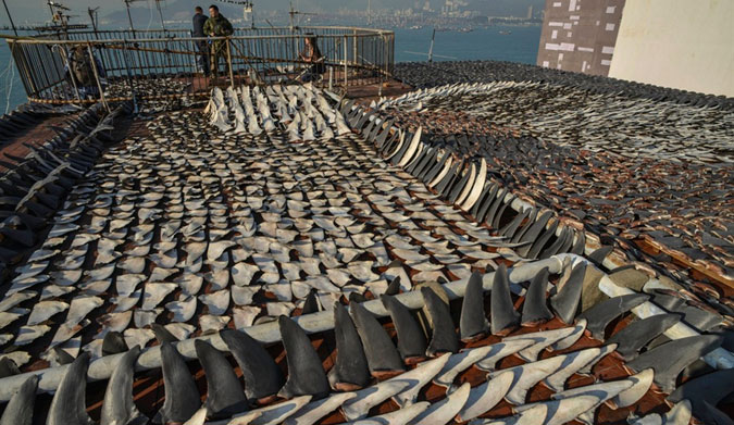 An entire rooftop in covered with shark fins for sale. Photo credit: South China Morning Post
