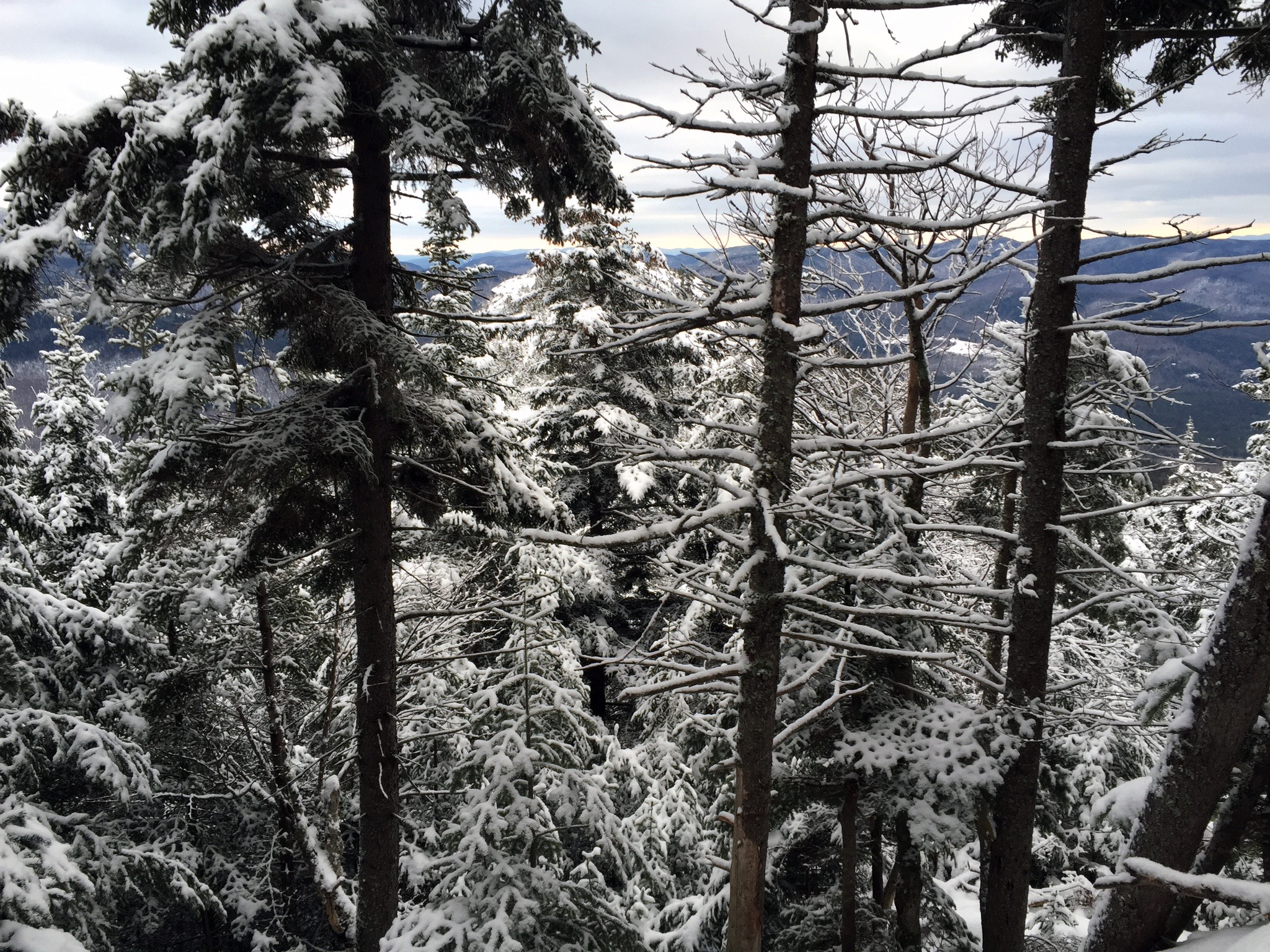 Snow-covered trees on the Dickey Welch hike